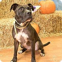 Adopt A Pet :: Benji - Warner Robins, GA