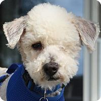 Adopt A Pet :: Kookie - La Costa, CA