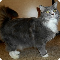 Adopt A Pet :: Anastasia - Chattanooga, TN