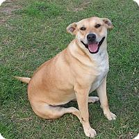 Adopt A Pet :: Pandora - Nashville, GA