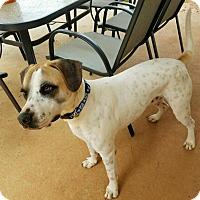 Adopt A Pet :: Maximilian - Daleville, AL