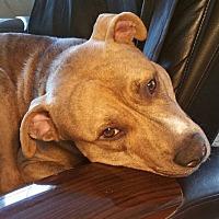Adopt A Pet :: Louie - Jacksonville, FL