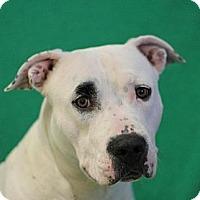 Adopt A Pet :: Roxy - Roosevelt, UT