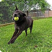Adopt A Pet :: Annabelle - Danbury, CT
