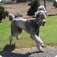 Adopt A Pet :: Phoenix - spring valley, CA