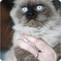 Adopt A Pet :: Bella - Columbus, OH