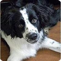 Adopt A Pet :: TY-Courtesy Listing - Buffalo, NY