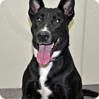 Adopt A Pet :: Ali - Port Washington, NY