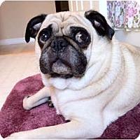 Adopt A Pet :: Hershey - Windermere, FL