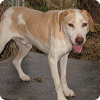 Adopt A Pet :: Coco - Savannah, MO