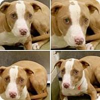 Adopt A Pet :: Trinity needs foster - Sacramento, CA