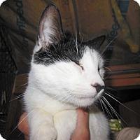 Adopt A Pet :: Rocky - Sanford, ME
