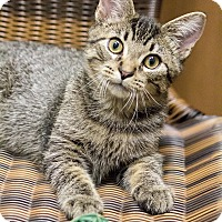Adopt A Pet :: Hippy Fisherman - Chicago, IL