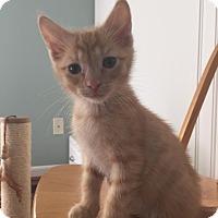 Adopt A Pet :: Sonny - Union, KY