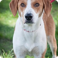 Adopt A Pet :: Barry - Gainesville, FL