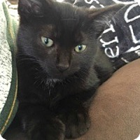 Adopt A Pet :: Magic - McHenry, IL