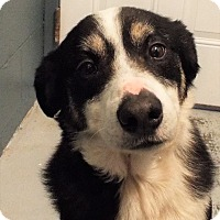Adopt A Pet :: Ziggy - Grants Pass, OR
