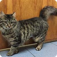 Adopt A Pet :: Twinkie - Merrifield, VA