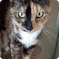 Adopt A Pet :: Pen Pal - Westminster, CA