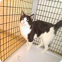 Adopt A Pet :: Norman Bates - Muscatine, IA