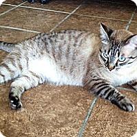 Adopt A Pet :: Binx - Tucson, AZ