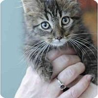 Adopt A Pet :: Dannie - Columbus, OH