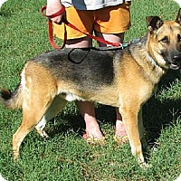 Adopt A Pet :: Max - Hernando, MS