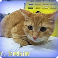 Adopt A Pet :: Mr. Sunshine - Orlando, FL