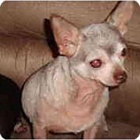 Adopt A Pet :: Iris - Madison, WI