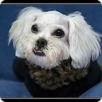 Adopt A Pet :: Franci - Fort Braff, CA
