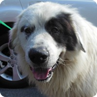 Adopt A Pet :: Forrest - Hagerstown, MD