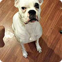 Adopt A Pet :: Odin - Woodinville, WA