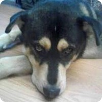 Adopt A Pet :: Teddy Bear - Sicklerville, NJ