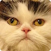 Adopt A Pet :: Carly - Beverly Hills, CA