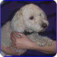 Adopt A Pet :: Skip - Hamilton, ON