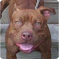 Adopt A Pet :: Annie - Chicago, IL