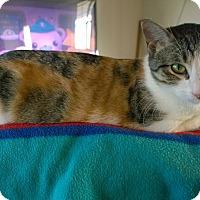Adopt A Pet :: Aina Precious - Ravenna, TX
