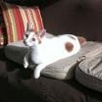 Adopt A Pet :: Felipe - Sarasota, FL