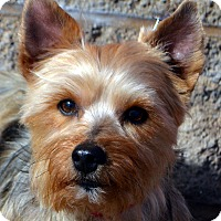 Adopt A Pet :: Terrance - Bridgeton, MO