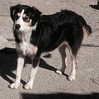 Adopt A Pet :: Donald - Hillsboro, OH