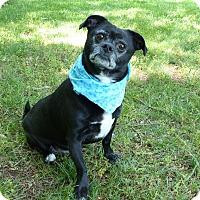 Adopt A Pet :: Blackie - Mocksville, NC