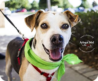 Beagle Mix Dog for adoption in Mooresville, North Carolina - Buddy