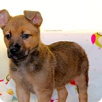 Adopt A Pet :: Questa - Los Angeles, CA