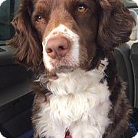 Adopt A Pet :: CO/Emmett (Adoption Pending!) - Walton, KY