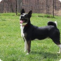 Adopt A Pet :: Bandit - Sparta, NJ