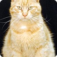 Adopt A Pet :: Butter Rum - Newland, NC