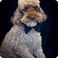 Adopt A Pet :: Leroy - Phelan, CA