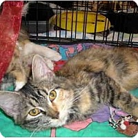 Adopt A Pet :: Ella & Bella - Riverside, RI