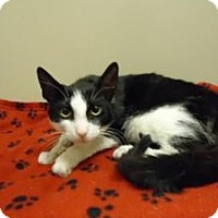 Adopt A Pet :: Maow - Cleveland, OH