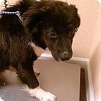 Adopt A Pet :: Big Elvis - New Boston, NH